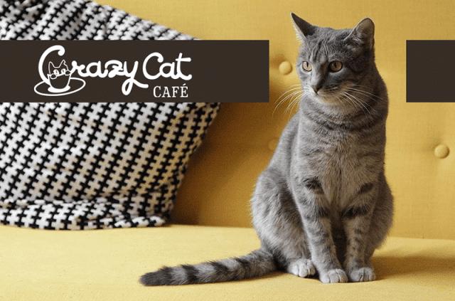 CRAZY CAT CAFE MILANO – Il lounge per gatti e padroni